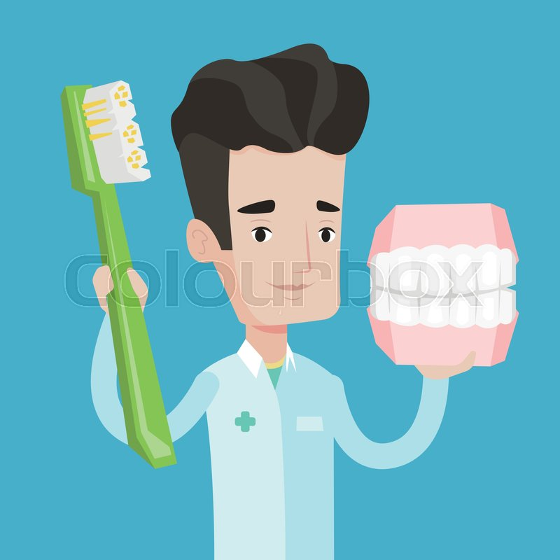 Young friendly dentist holding dental jaw model and a toothbrush in hands. Male dentist showing dental jaw model and toothbrush. Vector flat design illustration. Square layout, vector