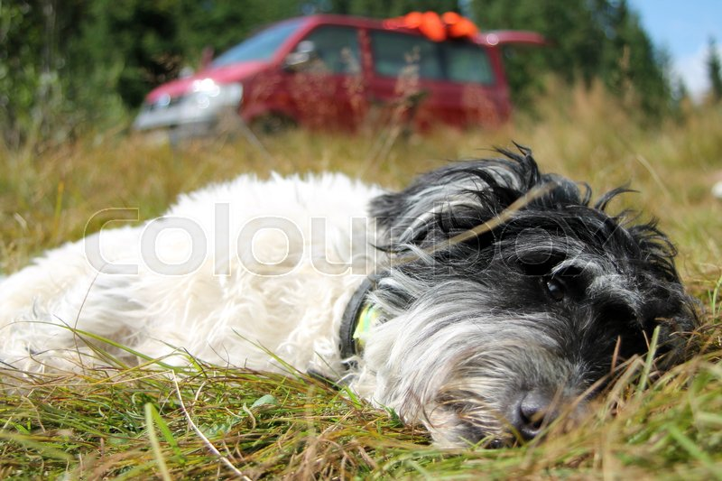 Resting dog, stock photo