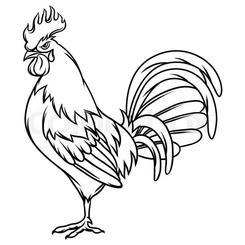 Line Art Rooster : Hand drawn illustration of black rooster on white
