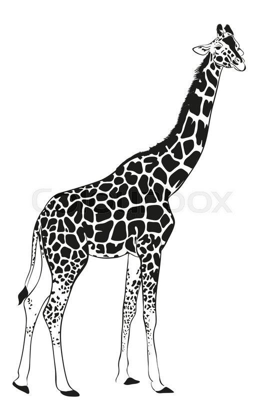 Vector Giraffe Black Silhouette Stock Vector