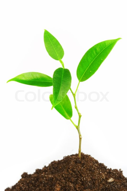 Young Plant On A White Background Stock Photo Colourbox
