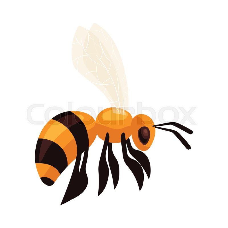 Flying honey bee, cartoon style vector illustration isolated on ...