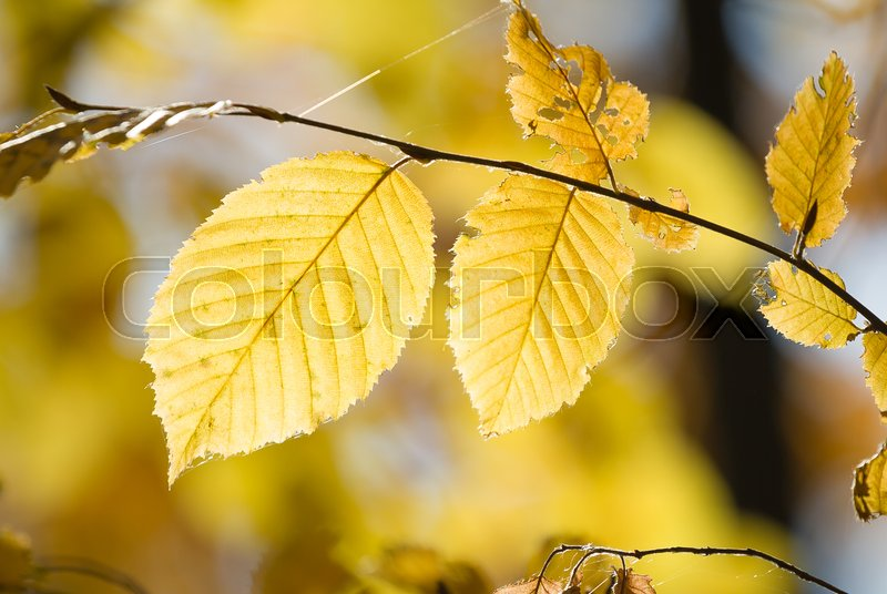 Stock image of 'Branch of beautiful autumn leaves on sunlight'