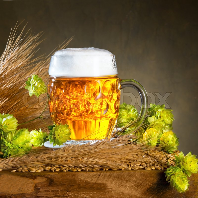 Glass of beer and raw material for beer production, stock photo