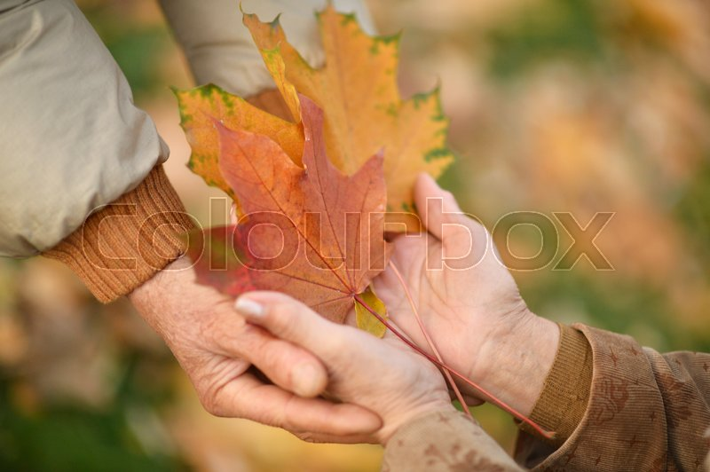 Stock image of 'Couple of hands together with leaves on background'