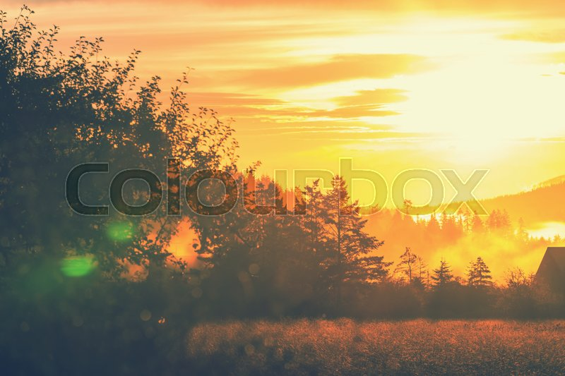 Stock image of 'Foggy meadow in the sunny morning with light spots.'