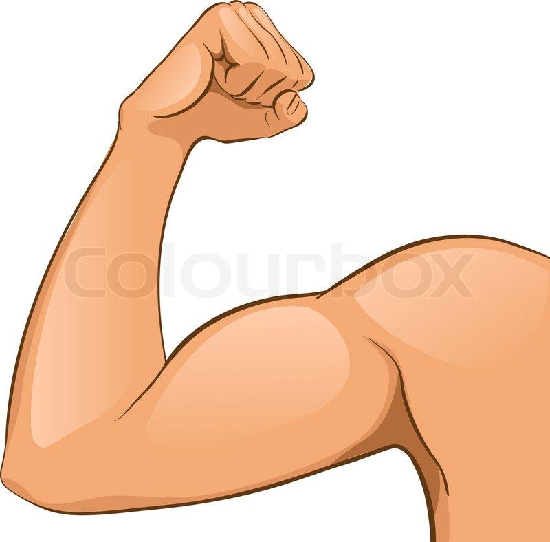 Mannes Arm Muskeln. | Vektorgrafik | Colourbox