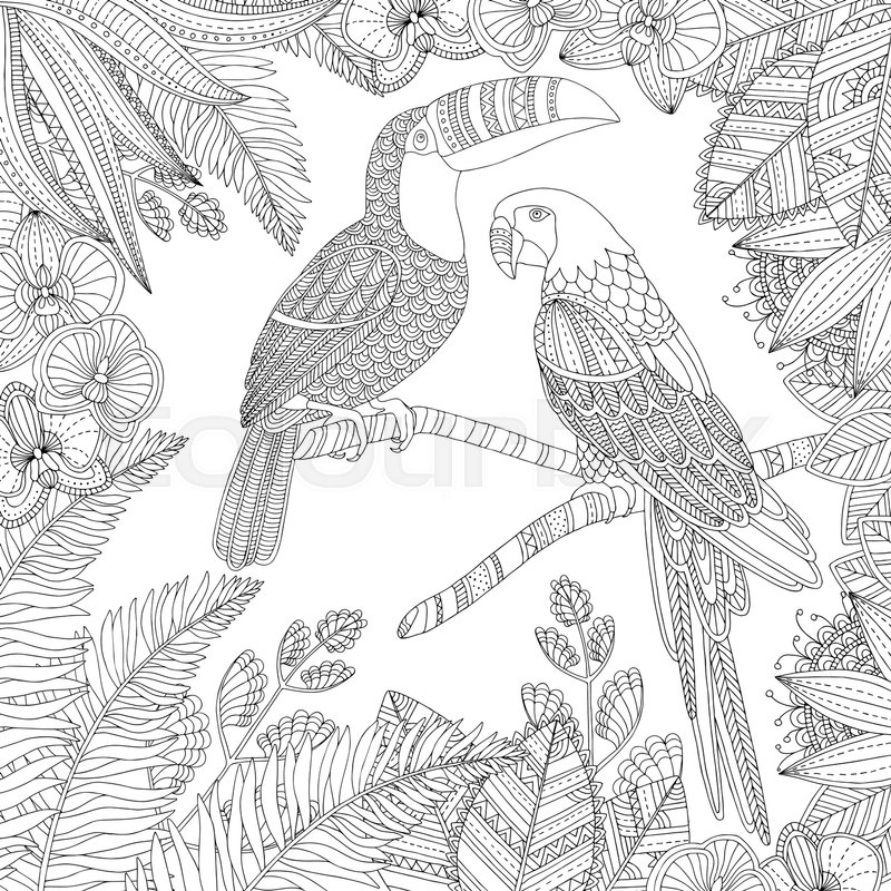 Vector Hand Drawn Toucan Bird And Ara Parrot Tropical Illustration For Adult Coloring Book Freehand Sketch Anti Stress Page With