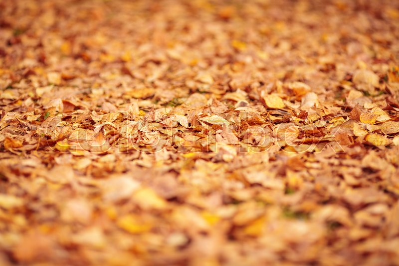 Stock image of 'Yellow and orange fallen autumn leaves background. Shallow depth of field'