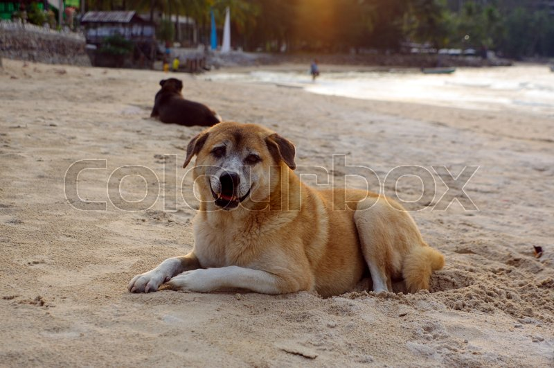 Stock image of 'two dogs lay on the beach watching the summer vacation'