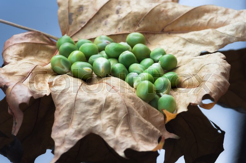 Stock image of 'Ripe fruits fresh organic green peas lying on the dry yellow leaves close-up. The concept of food and agricultural background.'