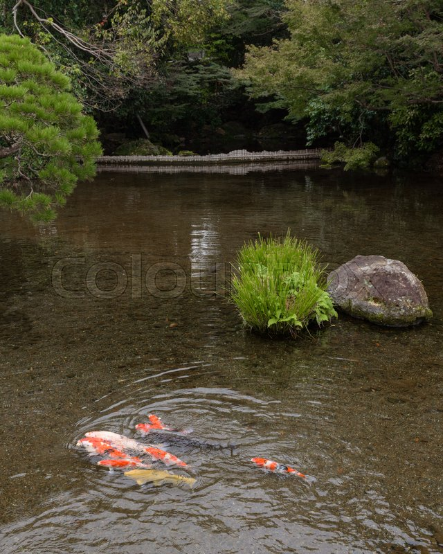 Stock image of 'Koi and beautiful scenery in Suizenji garden ,Japan'