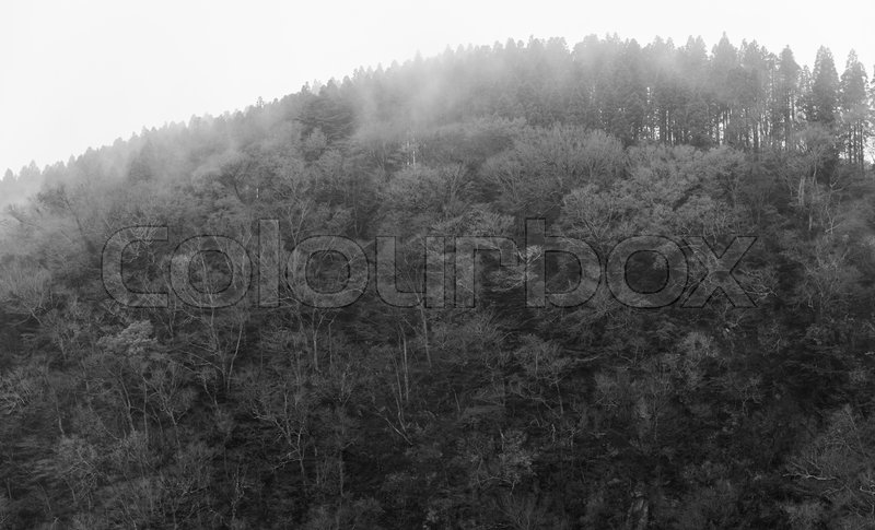 Stock image of 'Abstract foggy dark forest background,monochrome'