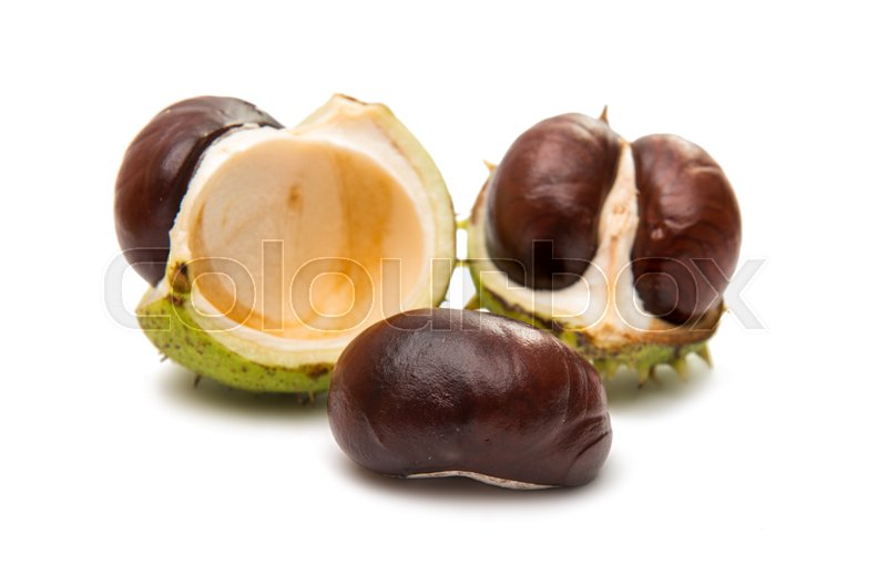 Stock image of 'fruit chestnut on a white background'