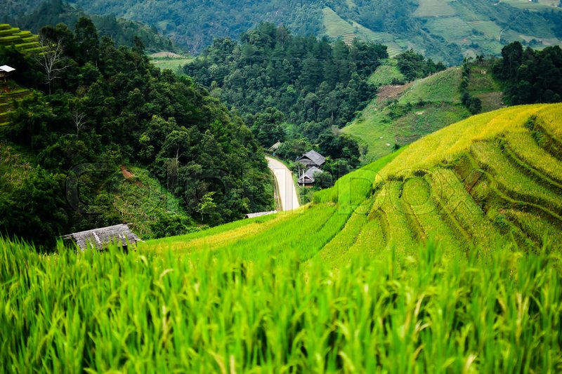 Stock image of 'Rice fields on terraced in rainny season at Mu Cang Chai, Yen Bai, Vietnam. Rice fields prepare for transplant at Northwest Vietnam'