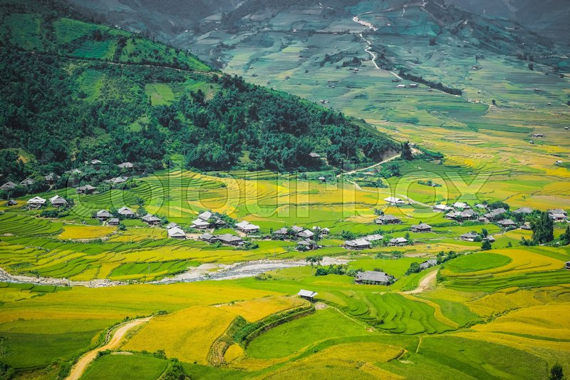 Stock image of 'Lim-Mong , paddy season'