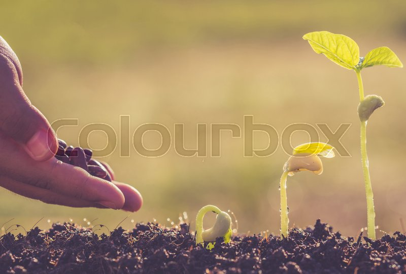 Stock image of 'Hand holding seed and growth of young green plant in soil'