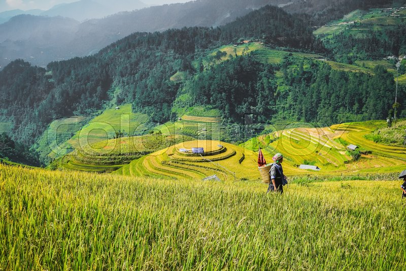 Stock image of 'Farmer and on Rice fields terraced of Mu Cang Chai, YenBai, Vietnam;'