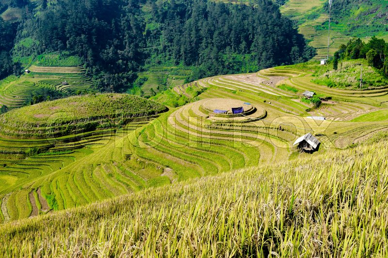 Stock image of 'Beautiful landscape view of rice terrace in mu cang chai City Mu cang cai is near by Sapa most popular vacation city in nortern of Vietnam'