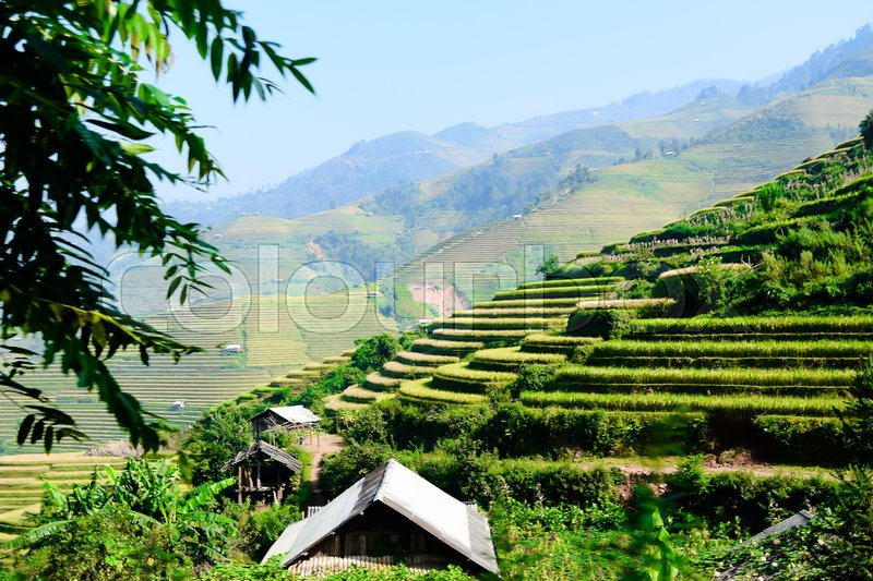 Beautiful view of house and village in rice terrace at tu le ,mu cang chai , vietnam, stock photo