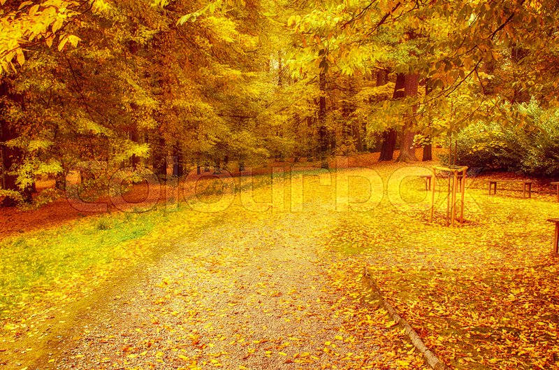 Stock image of 'Autumn sunny park with orange trees and empty alley , natural seasonal background'