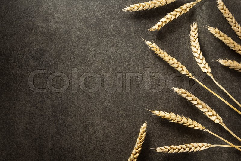 Stock image of 'ears of wheat on  black background texture'
