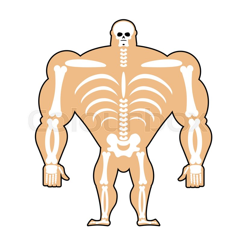 Human Structure Skeleton Men Stock Vector Colourbox