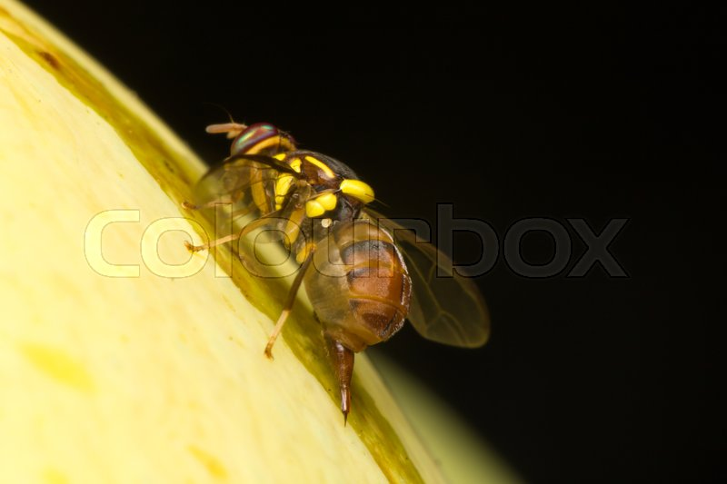 Stock image of 'Macro small insects. A small insect perched on a tree in the garden.'