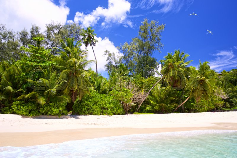 Stock image of 'Tropical white sand beach with palms in Seychelles, Mahe Island'