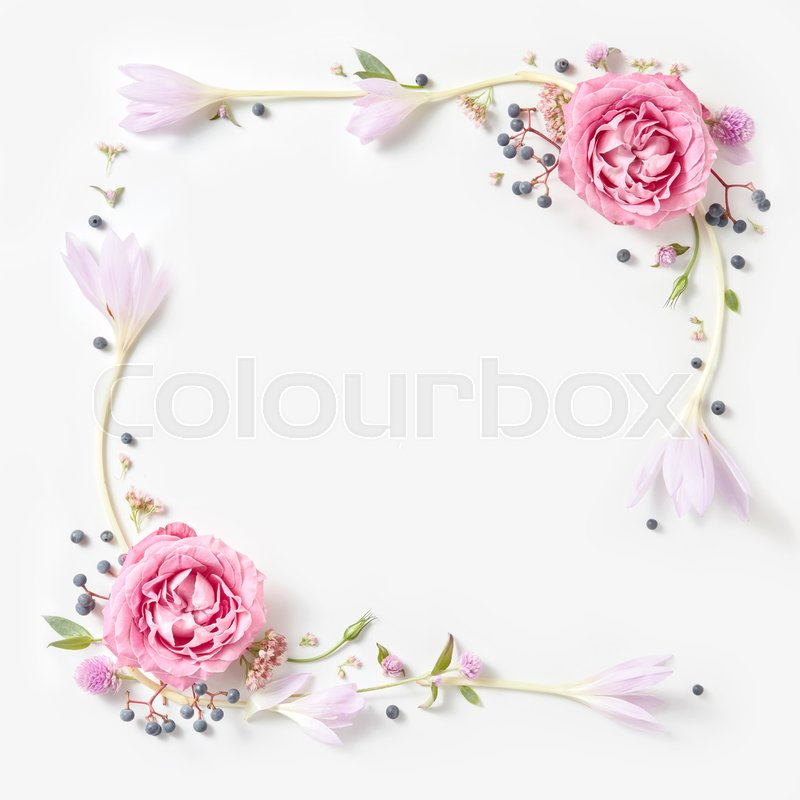 Fresh pink roses frame border isolated and copyspace for text on white background, stock photo