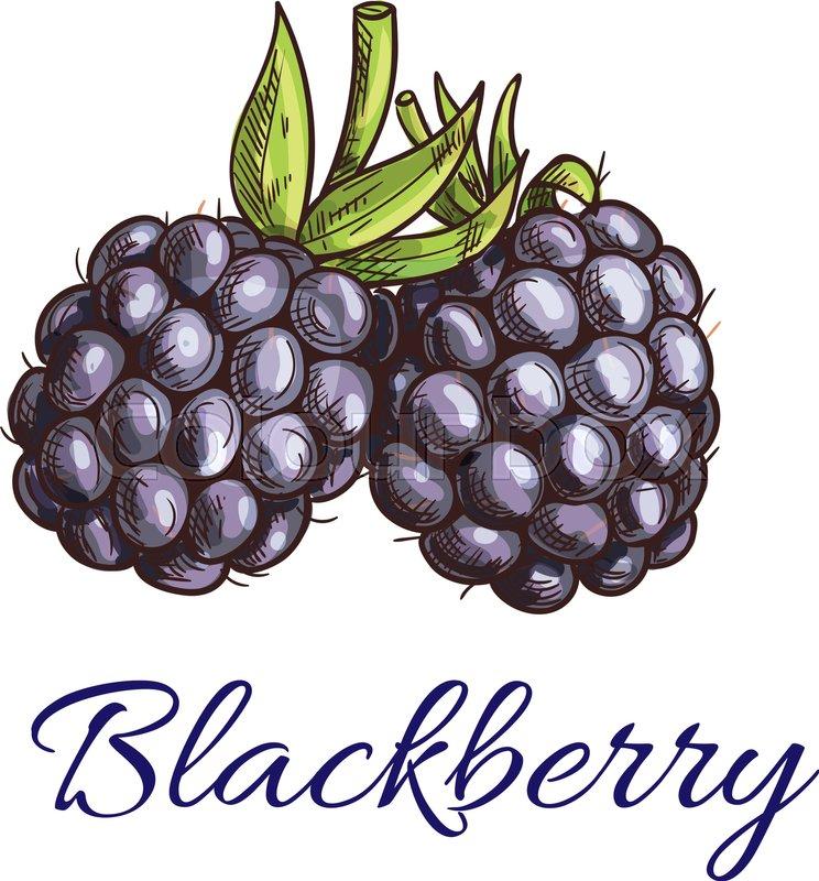 Berry Logo Design