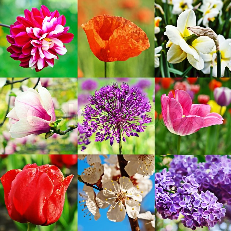 collage from nine image with different kind of flowers stock photo