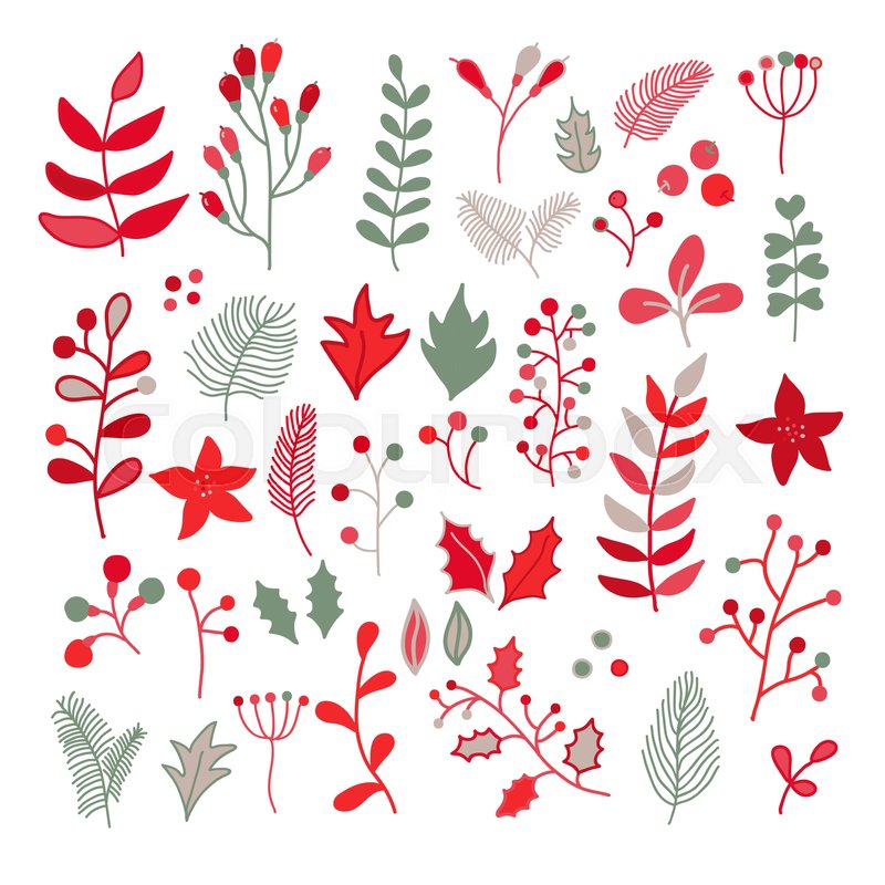 christmas floral vector drawing set with holly poinsettia
