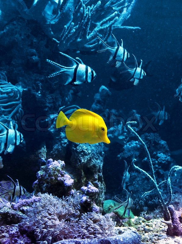 Coral reef fish yellow - photo#21