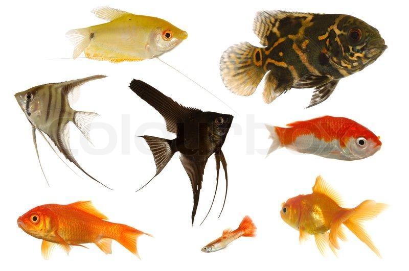 Natural Food For Aquarium Fish