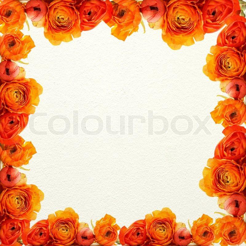 Frame of the orange flowers on a white texture | Stock Photo | Colourbox