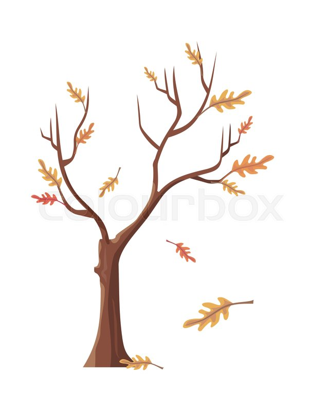 isolated oak tree with falling leaves tree forest leaf tree