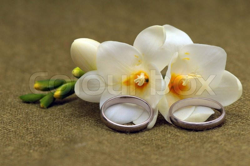 Two wedding rings of platinum and tender flowers on a green