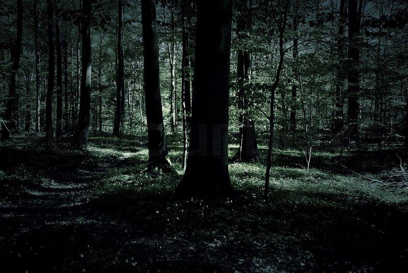 Creepy Forest At Night Stock Photo Colourbox