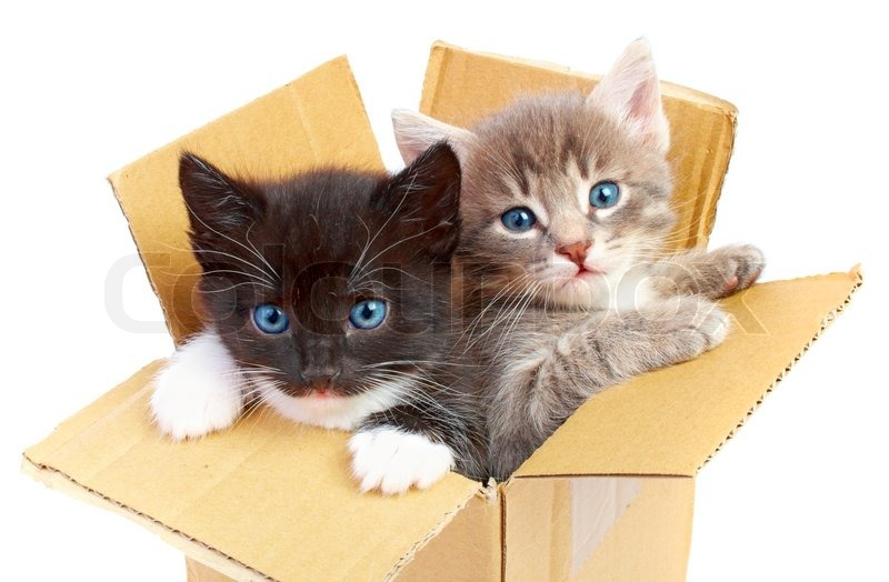 2168677-694944-kittens-in-box-isolated-o