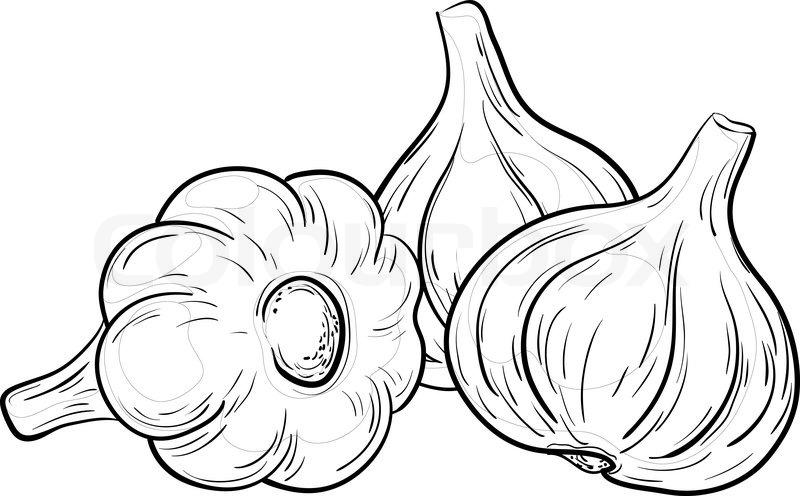Vegetable, spice, three garlics, vector, monochrome ... (800 x 496 Pixel)