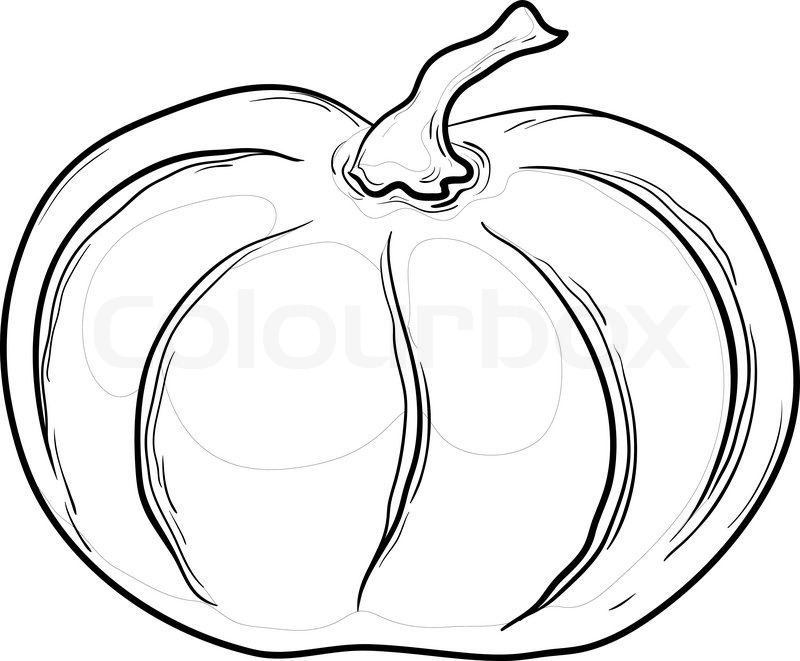 Vegetable Pumpkin Vector Monochrome Stock Vector