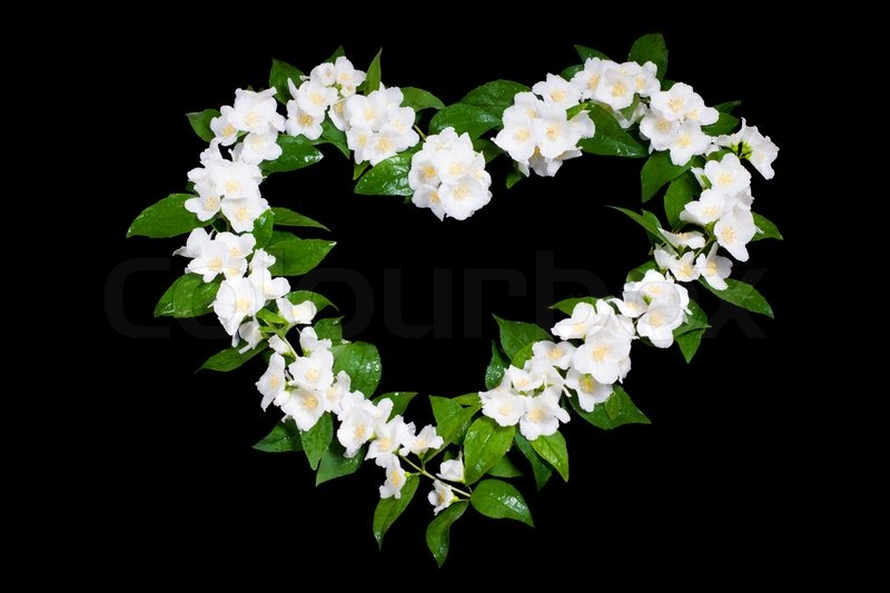 a jasmine flowers in the shape of heart on black stock photo
