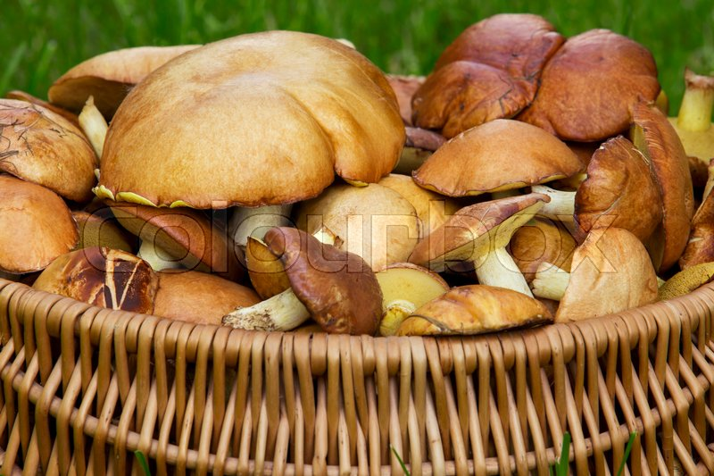 Stock image of 'the edible mushrooms in a wicker basket'