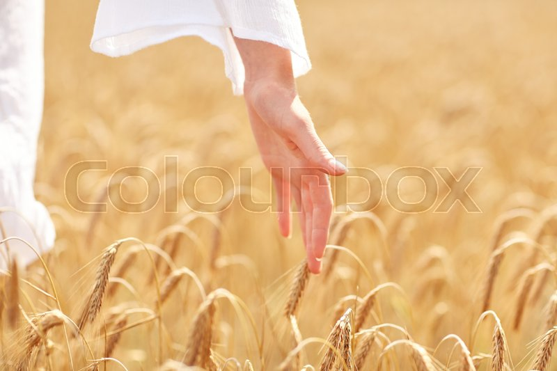 Stock image of 'country, nature, summer holidays, agriculture and people concept - close up of young woman hand touching spikelets in cereal field'