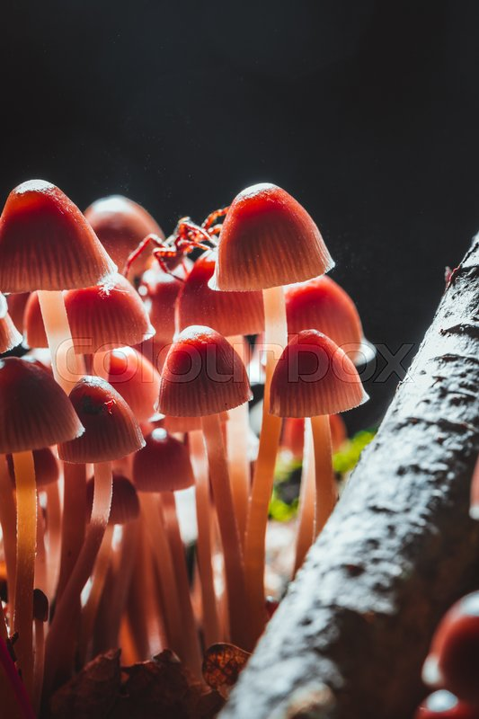 Stock image of 'many little mushrooms on a tree stump.'
