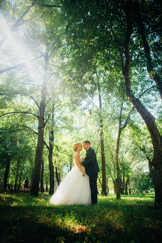 Stock image of 'couple bride and groom on the background of the park's trees.'