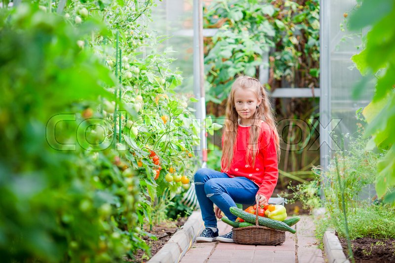 Stock image of 'Little girl in greenhouse with basket full of harvest. Time to harvest. Big basket full of vegetables'