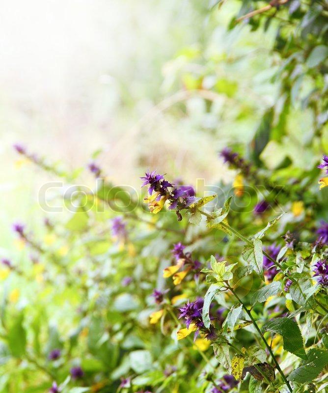 summer flower retro sunshine - photo #24