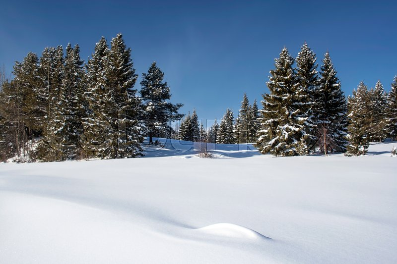 Stock image of 'Beautiful winter landscape in Sweden '